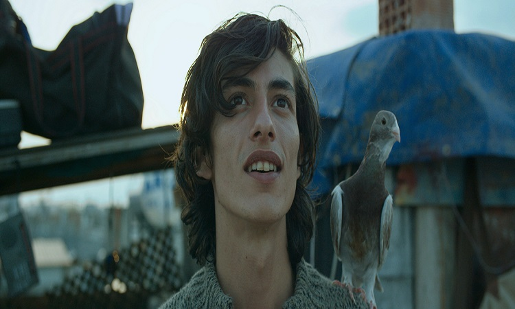 """""""Güvercin"""" filminden bir sahnede Yusuf ile güvercini Maverdi"""